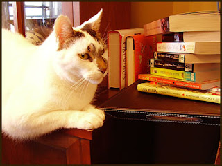 Bookshelf Cat, ever vigilant...