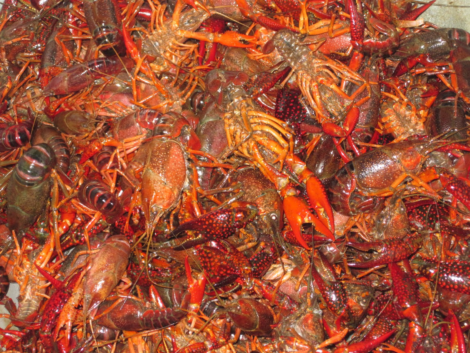 Tip For Choosing A Good Crawfish: Look For Ones That Have Curled Tails—this  Means That They've Been Cooked Properly—and The Bigger, The Tastier!