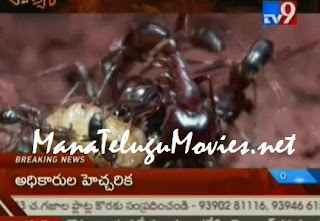 Rahasyam on African Tribal Ants