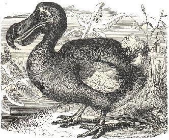 Sejarah Burung Dodo