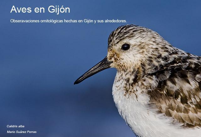 Aves en Gijón