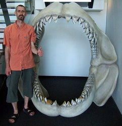 Megalodon - Does this massive shark still exist?