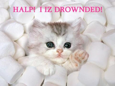 http://1.bp.blogspot.com/_ckBlasgNSzg/Sd5v2zXt4mI/AAAAAAAAL3c/8YPgxUDOAkY/s400/Cute+Cat+In+Marshmellows.jpg