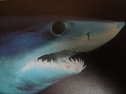 Shortfin Mako Shark