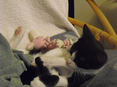 gatito adopcion soy un gato