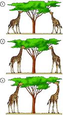 Jirafas de Lamarck