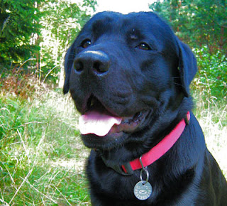 Pies Placek w lesie