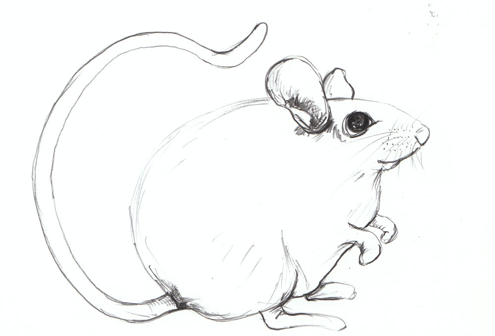 Line Drawing Mouse : Cynthia white: mouse for eri