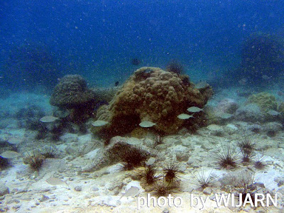 ปะการัง-เกาะริ้น