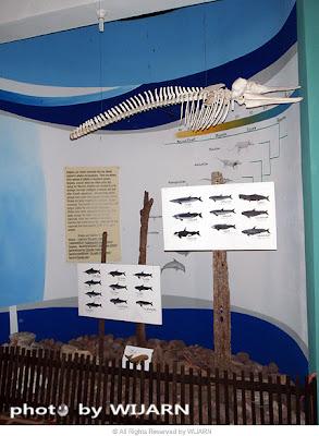 ห้องแสดงนิทรรศการสัตว์และพืชทะเล