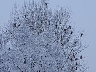 squad of eagles