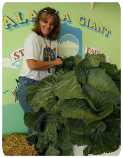 have you ever seen like this giant vegetable?