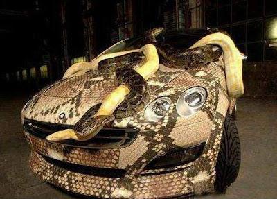 snake skin car
