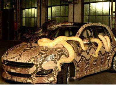 python skin in a car
