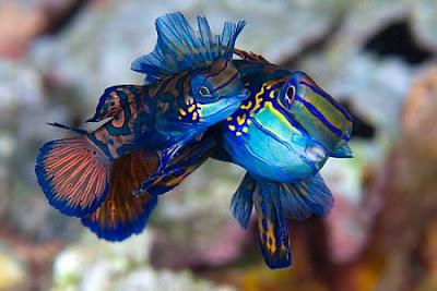 marine life is unique