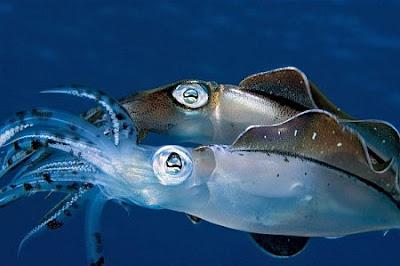 ocean life in animal planet