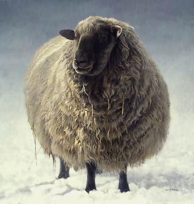 Salt Spring Sheep