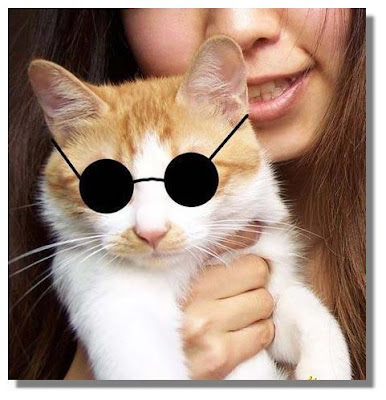 cat with round sunglass
