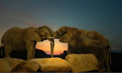 elephant in love you are my sweetheart forever