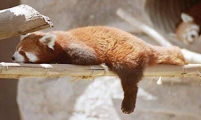 eating plant fox