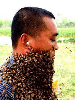 modesto bee and bee cake