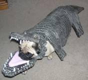 how to dress up dog