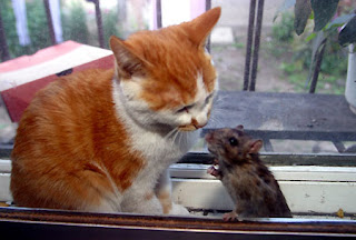 lovely cat & mouse