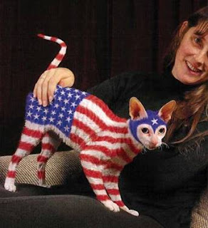 USA flag cat