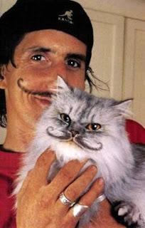 mustache cat - look funny