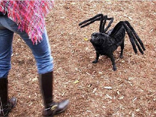 spider dog - look scary