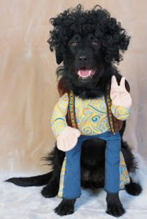 oldies fashion dog costume