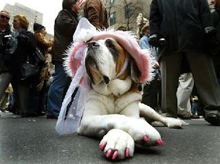bride dog waiting for the bridegroom