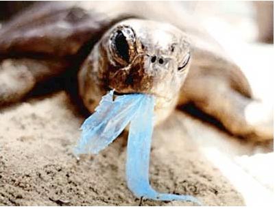 Plastic bags kill keep our oceans clean - Planet Rehab