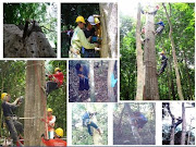 Gaharu/ Agarwood of Borneo