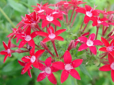 DK Flower