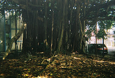 The other Ficus