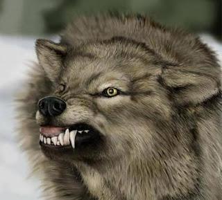 http://1.bp.blogspot.com/_cqjPy3CcFgA/S7y8UmU0eKI/AAAAAAAAZ1w/E0HJm0QChx0/s1600/angry_wolf-17138.jpg