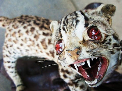 IMAGE(http://1.bp.blogspot.com/_crPBCZok0RE/SuBqM-czjQI/AAAAAAAAQeo/EAf69TGKbCs/s400/creepy-taxidermy-25.jpg)