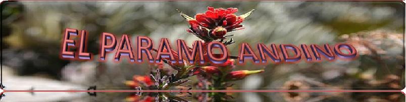 El Paramo Andino