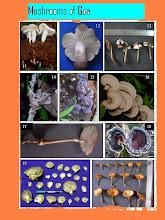 Mushrooms of western ghats of Goa