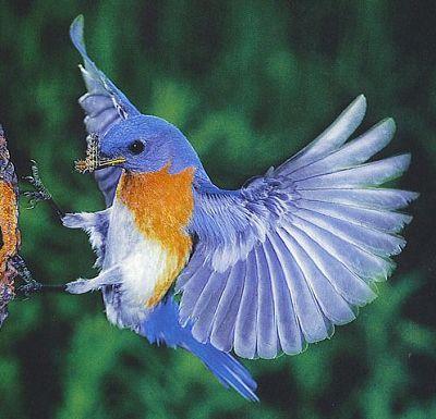Download Suara Kicau Burung Mp3 Bagus - Arena Berbagi.c