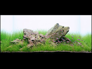Other Styles Are Less Frequent, But Always Make Use Of An Odd Number Of  Stones Of Varying Sizes. In The Aquascaping Community, Iwagumi Has Taken On  ...
