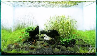 Planted Sand Aquarium
