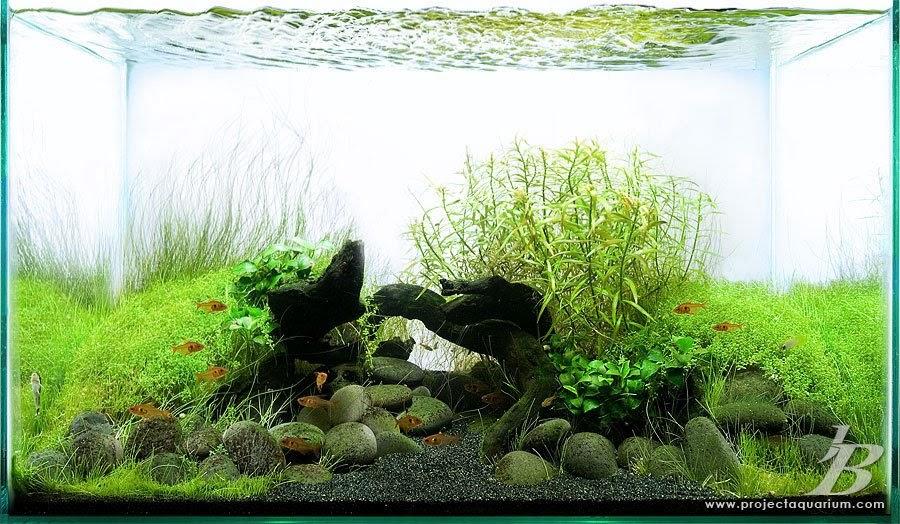 ROCKUARIUM AQUASCAPE: Merawat Aquascape
