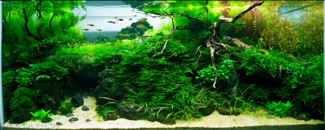 2010 Aquatic Gardeners Association Aquascaping Contest Results