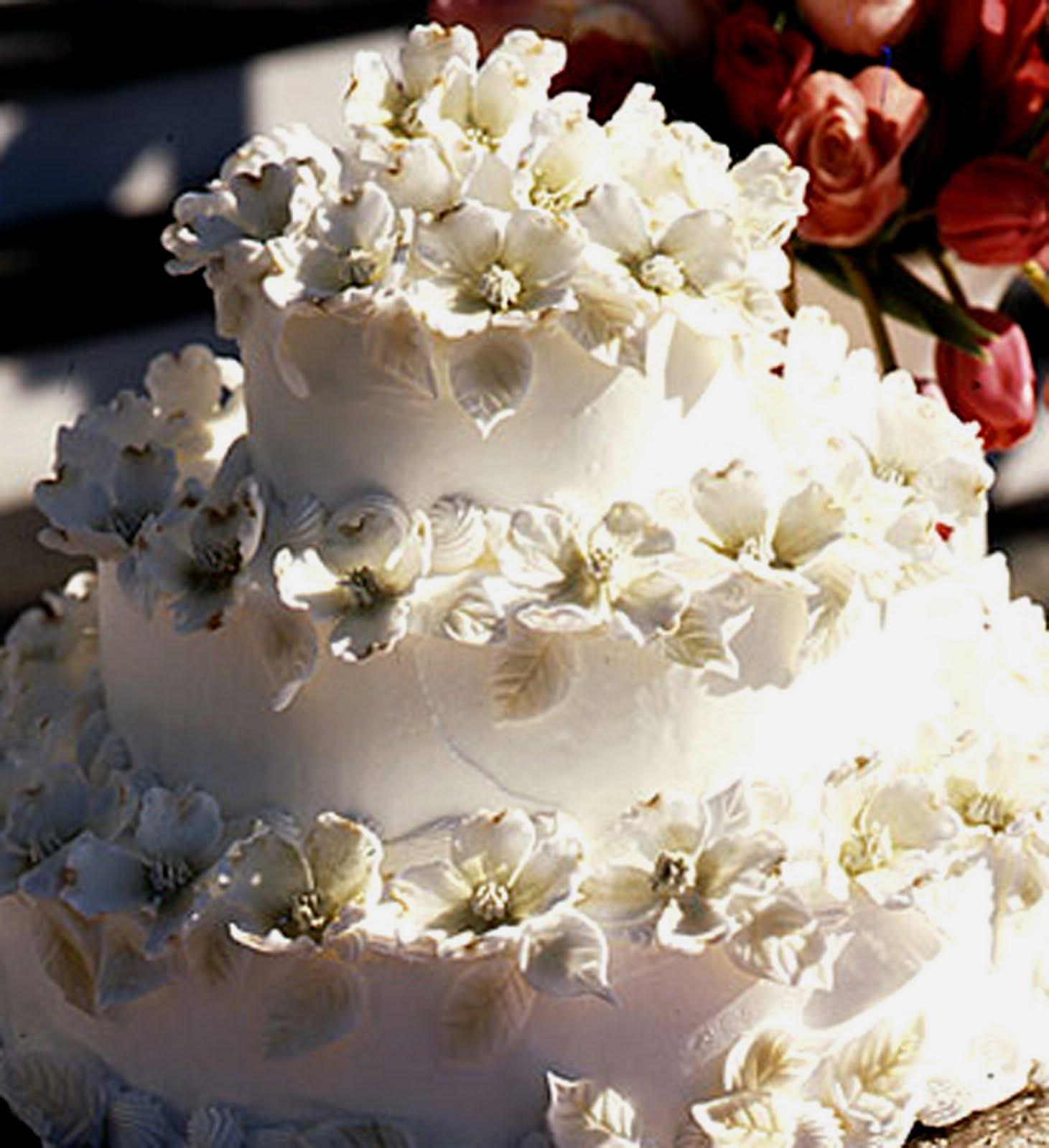 Wedding Cake Tree Dogwood: Flora wonder the variegated c section ...