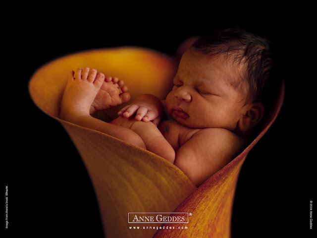 Baby Pictures Anne Geddes Photos