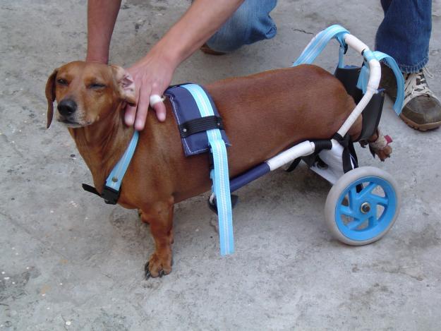 Amontonador urgente de palabras noviembre 2010 for Sillas para perros