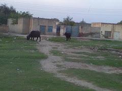 Wandha Gulloo khelan wala Mianwali