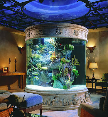 [Gambar: in_house_aquarium_2.jpg]